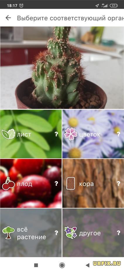 PlantNet определение растения по листу цветку, плоду, коре