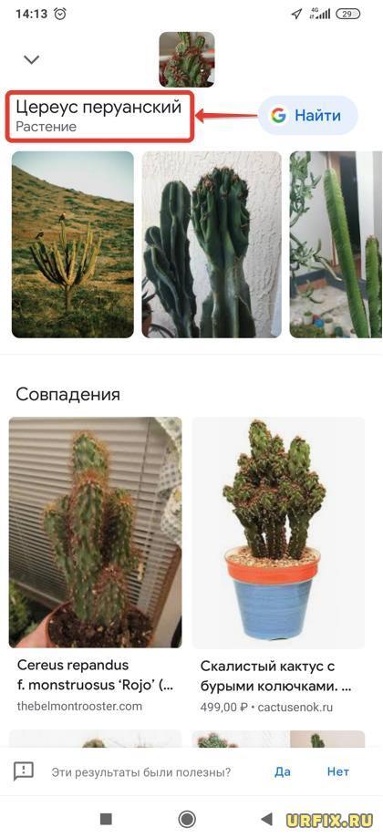 Узнать кактус по фотографии в приложении Google Lens